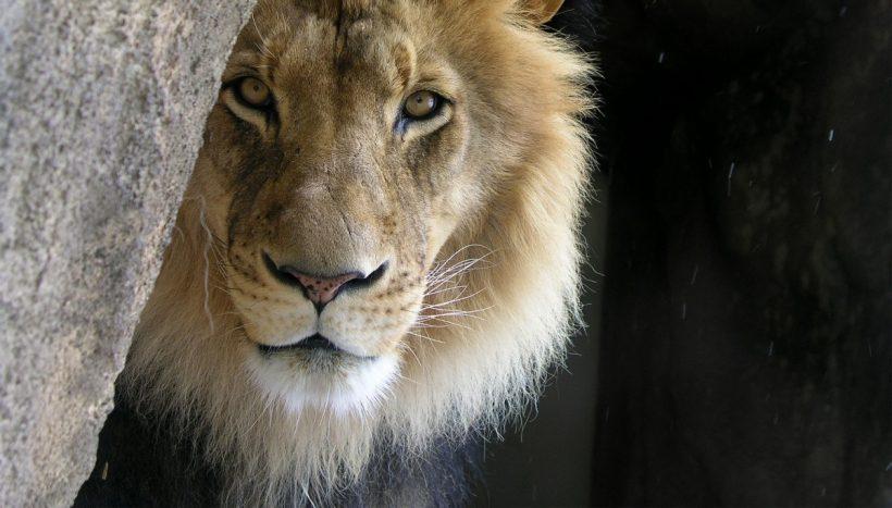 Doświadczamy mocnych, energetycznych przeskoków – 8:8 Lion's Gate – od 26 lipca do 11 sierpnia.