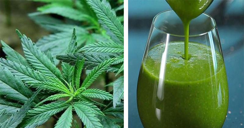 Marihuana inaczej? Oto 4 zaskakujące korzyści zdrowotne z picia soku!